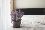 15 növény, amely tökéletes lehet a hálószobába