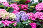 4 tipp az egészséges, csodaszép balkonnövényekhez