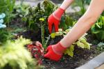 Júliusi teendők a kertben