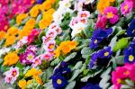 A 4 legnépszerűbb színvilág a kertbe