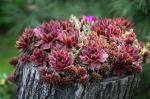 5 csodanövény, amelyek télen is a teraszod díszei lehetnek