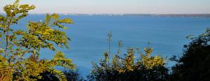Botrány a Balatonon: zavarnák a nagy fák a panorámát, gázolajjal locsolták, hogy ne nőjön